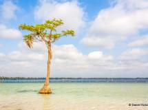 Tree-in-water-at-white-lake